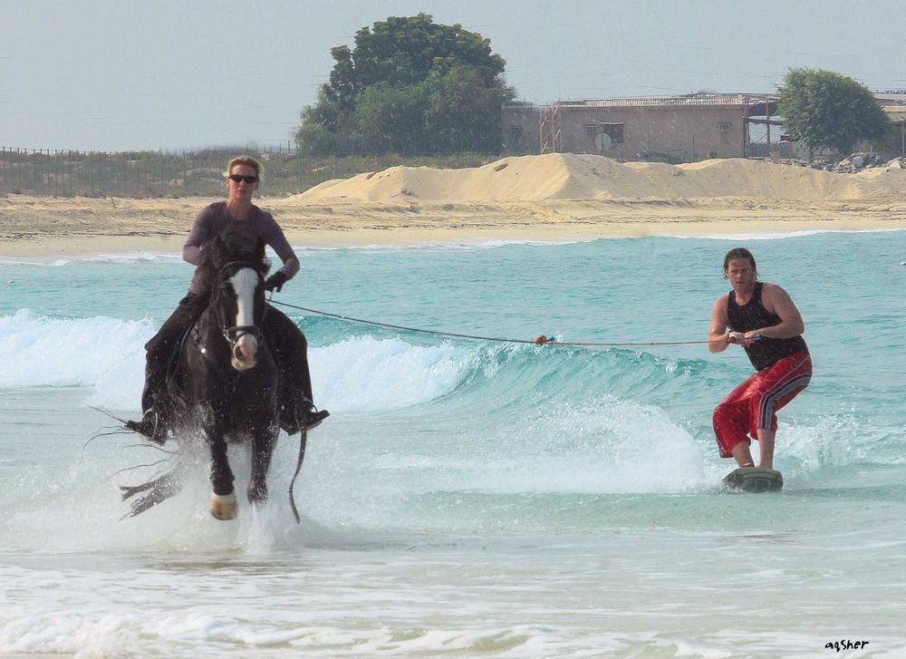 horse surfing training
